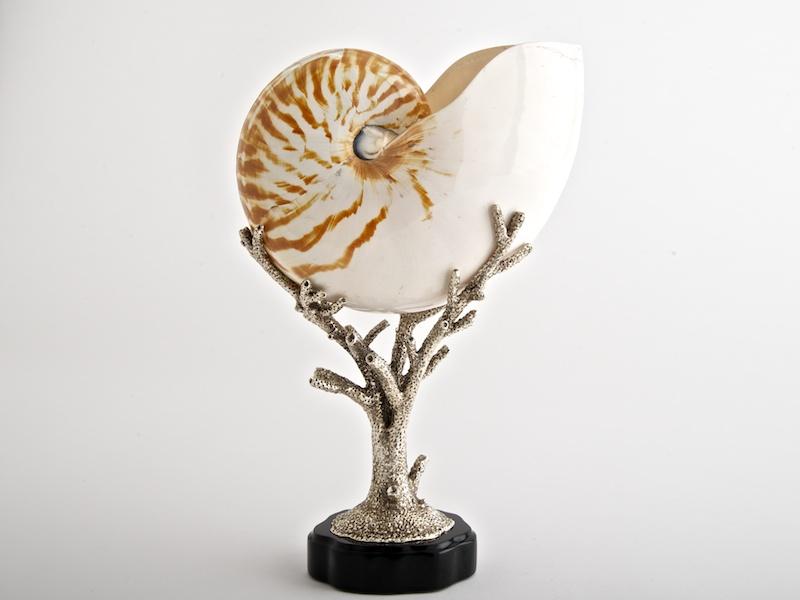 Oceana - Natural Nautilus